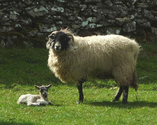 spring lamb hog roast yorkshire dales